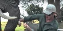 فيل يهاجم سياح في إحدى مطاعم زيمبابوي
