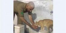 بسبب قطة يكافأ بوجبة مجانية لمدة عام