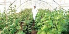 افتتاح مشروع مزرعة في كل بيت بالشارقة