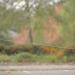 بالفيديو: شاحن أيفون قادر على جر سيارة!