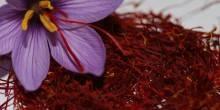 دراسة تؤكد أن الزعفران يعيد البصر للكبار