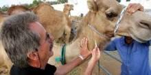 167 مخالفة مسجلة على المؤسسات البيطرية في دبي