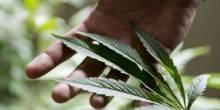 دبي: السجن لبريطاني حاول زراعة الماريجوانا بالمايكرويف