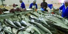 تسجيل انخفاض ملحوض في أسعار الأسماك بأبوظبي