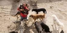 مليونير صيني ينفق كامل ثروته على الكلاب المشردة