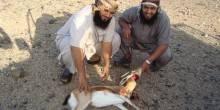 خارجية الإمارات تدعو موطنيها للإلتزام بقوانين الصيد في السودان