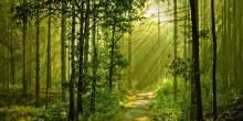 إسباني يعيش في غابة 20 سنة بسبب اكتئاب نفسي