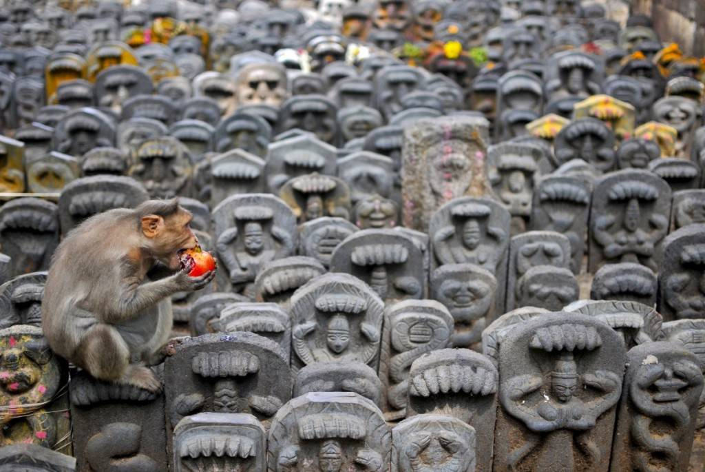a-bonnet-macaque-sits-on-consecrated-idols-of-snakes-as-it-eats-a-pomegranate-fruit-left-behind-as-an-offering-by-devotees-during-the-nag-panchami-festival-in-bengaluru-india-1024x685