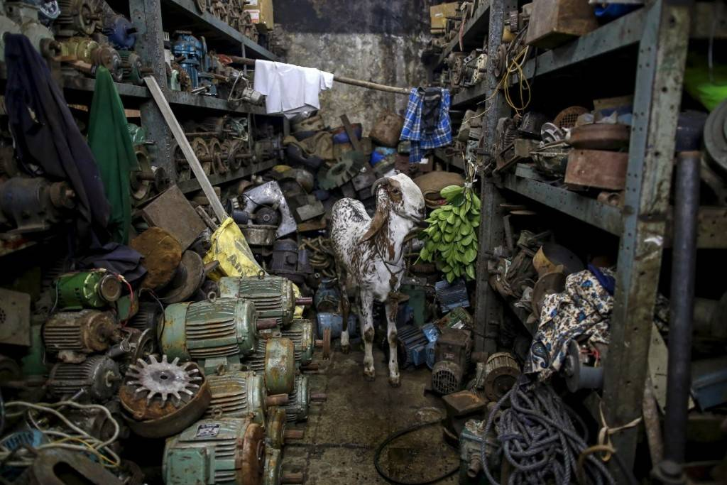a-goat-eats-leaves-inside-a-motor-pump-workshop-in-mumbai-india-1024x683