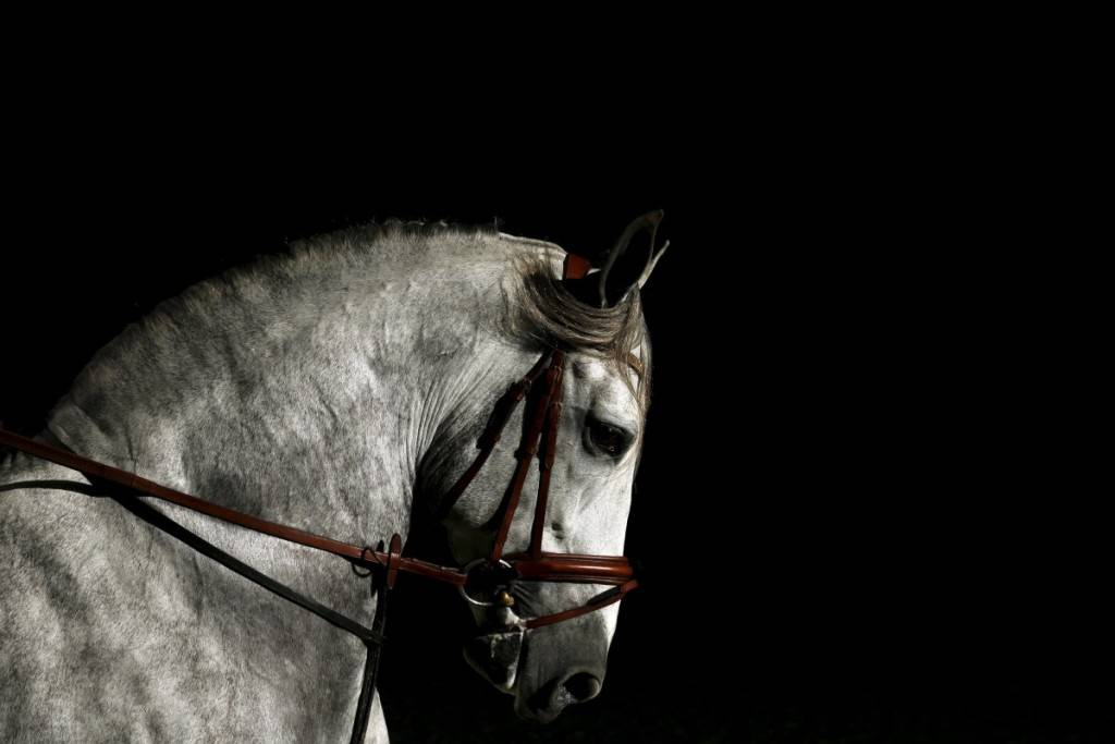 a-purebred-spanish-horse-struts-his-stuff-at-the-international-pre-horse-fair-in-the-andalusian-capital-of-seville-spain-1024x683