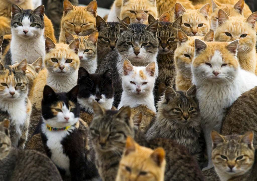 an-army-of-cats-rules-japans-remote-aoshima-island-where-felines-outnumber-humans-six-to-one-1024x721