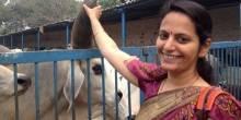 مسابقة لأجمل سلفي مع البقر في الهند