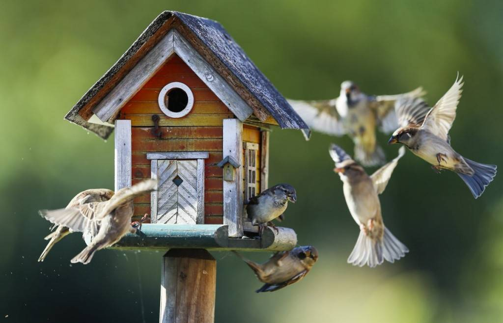 sparrows-fly-around-a-bird-feeder-in-putgarten-germany-1024x658