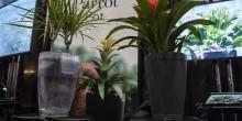ابتكار حوض ذكي يحافظ على النباتات