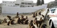 بالفيديو: قردة مجهولة المصدر تهاجم مدرسة سعودية