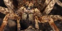 بالفيديو: حاول إخراج يرقة فخرج له عنكبوت ضخم!