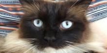 جائزة مغرية للقبض على سفاح القطط