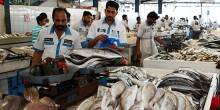 افتتاح سوق جديد للأسماك بدبي في النصف الأول من 2016