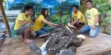 ثعابين تدلّك السياح في الفلبين!
