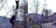 بالفيديو: يتسلق شجرة هربًا من هجوم دب.. وجاره يكتفي بالتصوير