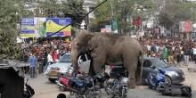 بالفيديو: فيل هائج يدمر المنازل في مدينة هندية