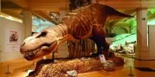 انطلاق معرض الديناصورات المخصص للأطفال في مركز صحارى بالشارقة