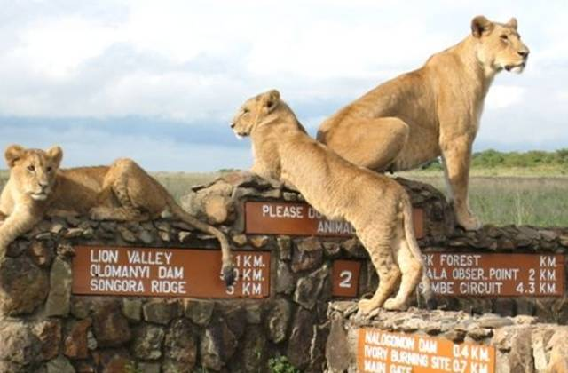 Nairobi-Nat-Park-3
