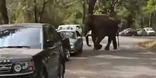 بالفيديو: فيل هائج يحطم 15 سيارة