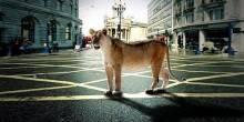 حيوانات تميز بلدانها وتجعلها أكثر شعبية