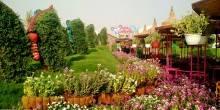 حديقة الفراشات في دبي أقرب من الخيال في عالم الجمال
