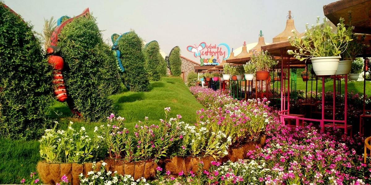 حديقة الفراشات في دبي أقرب من الخيال في عالم الجمال زووم الإمارات