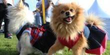 بالصور: مهرجان الحيوانات الأليفة في أبوظبي