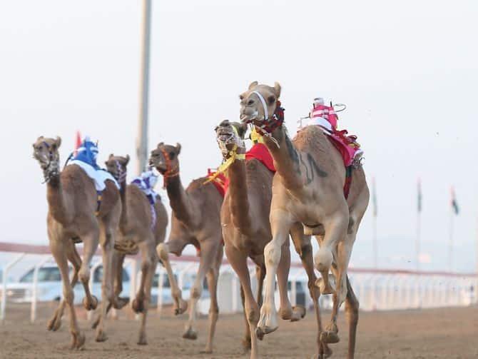 20140317_Al-Marmoom-Heritage-Festival-2014-2