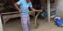 بالفيديو: رجل يعثر على ثعبان ضخم تحت سريره