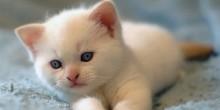 طبيب يعرض 20 ألف دولار مكافأة لمن يعثر على 7 قطط مفقودة