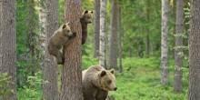 استمتع بمشاهدة الدببة في هذه المناطق