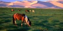 منغوليا بين صيف حافل و خريف مهجور
