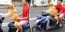 بالفيديو: كلب يقود دراجة نارية بمهارة في إندونيسيا