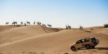 محمية دبي الصحراوية مفهوم جديد للسياحة البيئية