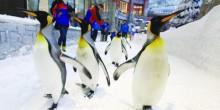 بالفيديو: طيور البطريق القطبية تجذب زوار سكي دبي