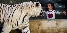 هكذا ستحمي حديقة الإمارات للحيوانات زوارها من حرارة الشمس المرتفعة