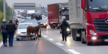 الشرطة الألمانية تطارد عجلاً بالمروحية والسيارات لعدة ساعات