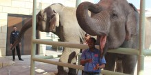 التفاعل مع الفيلة و إطعامها أصبح ممكنًا في حديقة حيوان الإمارات بأبوظبي