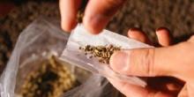 القبض على نيجيري بتهمة حيازة 4 كيلو غرامات من الماريجوانا والتخطيط لبيعها