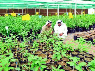 الزراعة في الامارات