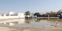 100 ألف درهم غرامة للحد من انتشار البعوض في دبي