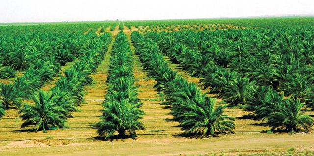 بحث عن  الزراعة في الامارات
