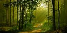 ماهي أجمل الغابات في العالم؟