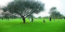 الحدائق الخضراء في الشارقة وجه آخر لجمال الإمارة