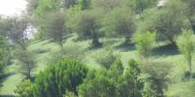 تقرير عن جهود دولة الامارات العربية المتحدة في حماية البيئة